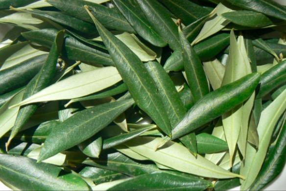 Biblijski lijek star 3500 godina: Moćan čaj o kojem se malo u narodu zna (RECEPT)