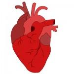 srce-lijek