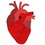 srce-lijek-v