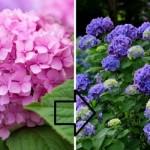 cvijece-f