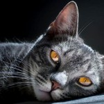 macka-spava