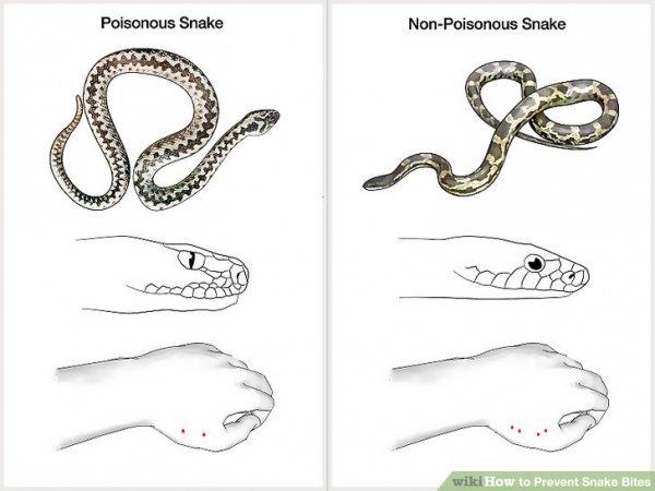 zmija-slika-2