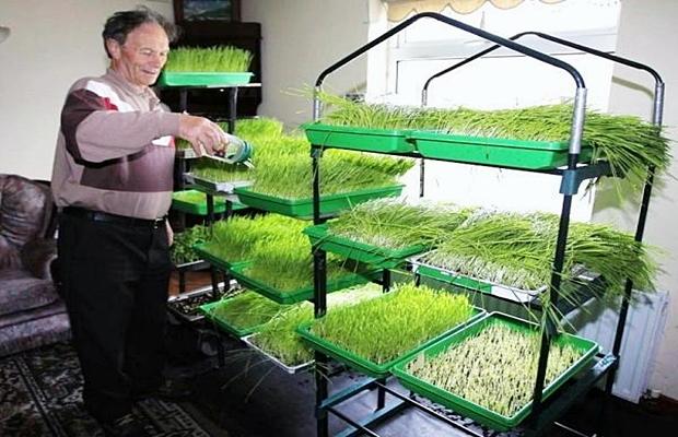 covjek-trava