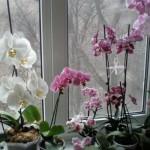 prelijepe-orhideje
