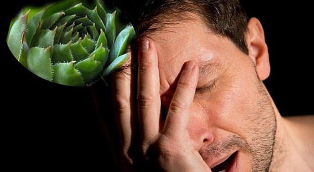 biljka-aloa