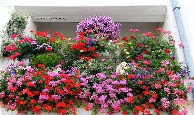 cvijece-basta
