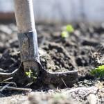 DA LI STE OVO ZNALI: Rad u bašti liječi od depresije i čini ljude veoma sretnim!