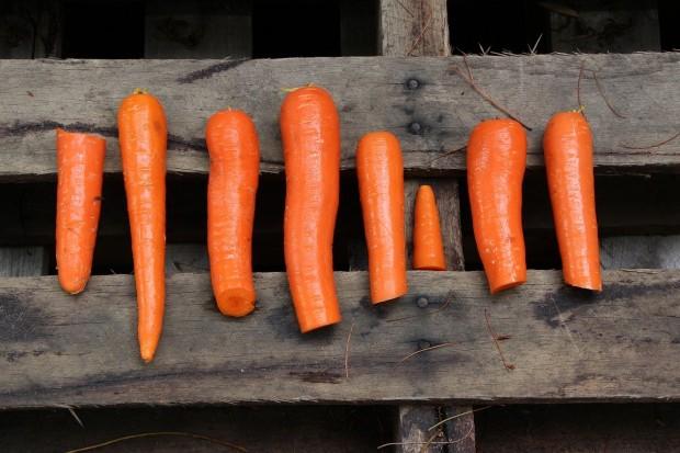orange-1965920_1280